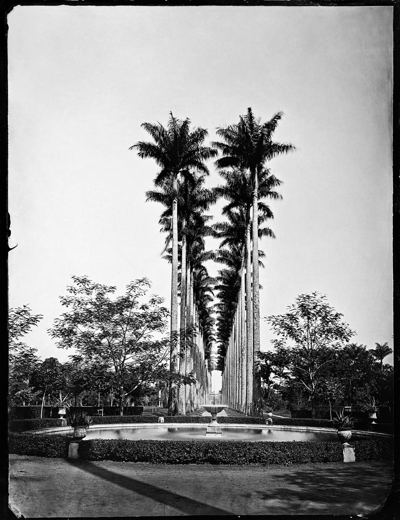 Palm tree Alley and water fountain, Jardim Botânico (Botanical Garden), circa 1890