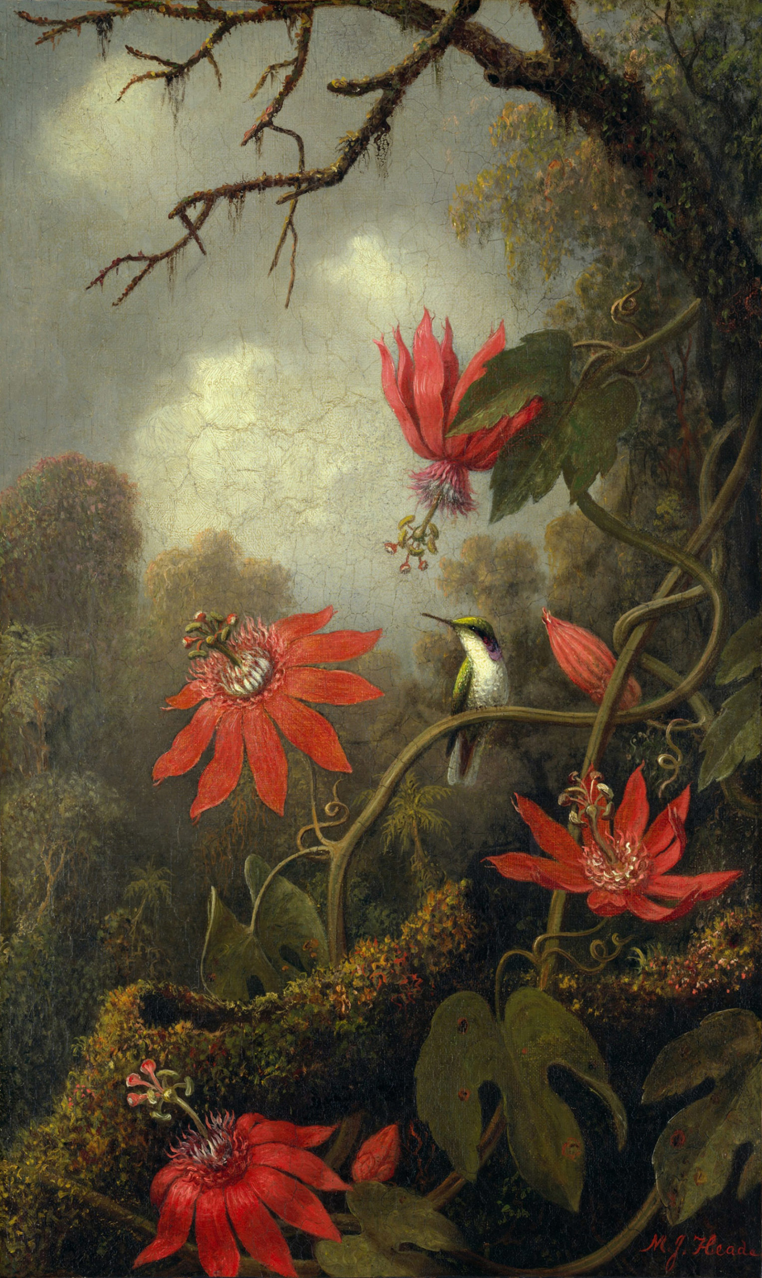 Hummingbird and Passionflowers; painting by Martin Johnson Heade